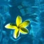 Оригінальна автрака из категории Квіти #684