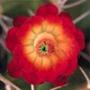 Бесплатная автрака из категории Цветы #697