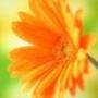 Бесплатная картинка для аватарки из категории Цветы #699