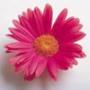 Безкоштовна ава из категории Квіти #705