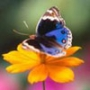 Оригінальна картинка для аватарки из категории Квіти #708