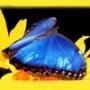 Безкоштовна ава из категории Квіти #712