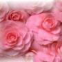 Красивая ава из категории Цветы #716