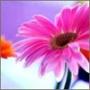 Прикольна автрака из категории Квіти #720