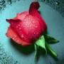 Гарна ава из категории Квіти #722