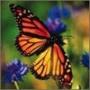 Прикольная картинка для аватарки из категории Цветы #725