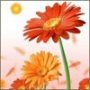 Бесплатная картинка для аватарки из категории Цветы #726