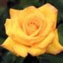 Прикольна ава из категории Квіти #727
