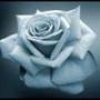Крута картинка для аватарки из категории Квіти #732