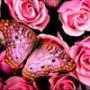 Крутая картинка для аватарки из категории Цветы #742