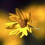 Безкоштовна ава из категории Квіти #743