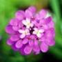 Оригінальна картинка для аватарки из категории Квіти #744