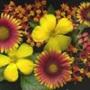 Оригінальна ава из категории Квіти #745