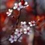 Бесплатная автрака из категории Цветы #749