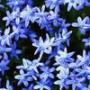Красивая ава из категории Цветы #755
