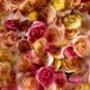 Прикольная картинка для аватарки из категории Цветы #756