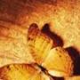 Оригінальна картинка для аватарки из категории Квіти #759