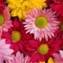 Крута картинка для аватарки из категории Квіти #760