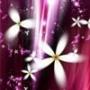 Гарна автрака из категории Квіти #763