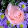 Крутая ава из категории Цветы #769