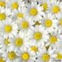 Крута ава из категории Квіти #770