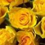 Бесплатная картинка для аватарки из категории Цветы #774
