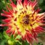 Крута ава из категории Квіти #780