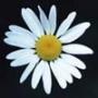 Оригінальна картинка для аватарки из категории Квіти #784