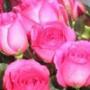 Крутая ава из категории Цветы #785