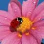 Крутая ава из категории Цветы #786