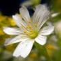 Бесплатная автрака из категории Цветы #789