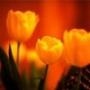 Оригінальна картинка для аватарки из категории Квіти #790
