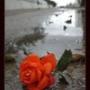 Оригинальная картинка для аватарки из категории Цветы #802