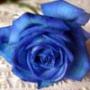 Гарна картинка для аватарки из категории Квіти #803