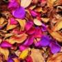 Прикольная автрака из категории Цветы #804