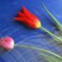 Крута ава из категории Квіти #807