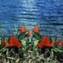 Оригінальна ава из категории Квіти #811