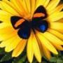 Прикольна картинка для аватарки из категории Квіти #826