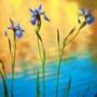 Прикольна автрака из категории Квіти #827