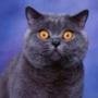 Прикольная картинка для аватарки из категории Животные #1556
