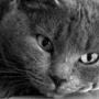 Бесплатная картинка для аватарки из категории Животные #1570