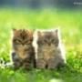Красивая картинка для аватарки из категории Животные #1576