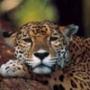 Крутая ава из категории Животные #1592