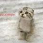 Красивая картинка для аватарки из категории Животные #1606