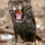 Красивая ава из категории Животные #1643