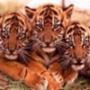 Прикольная картинка для аватарки из категории Животные #1651