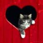 Крутая картинка для аватарки из категории Животные #1663