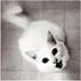 Прикольная ава из категории Животные #1679