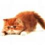Оригинальная картинка для аватарки из категории Животные #1697