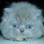 Крутая картинка для аватарки из категории Животные #1701
